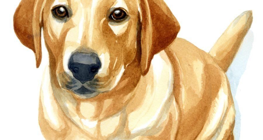 6 Popular Dog Breeds' Cutest Images
