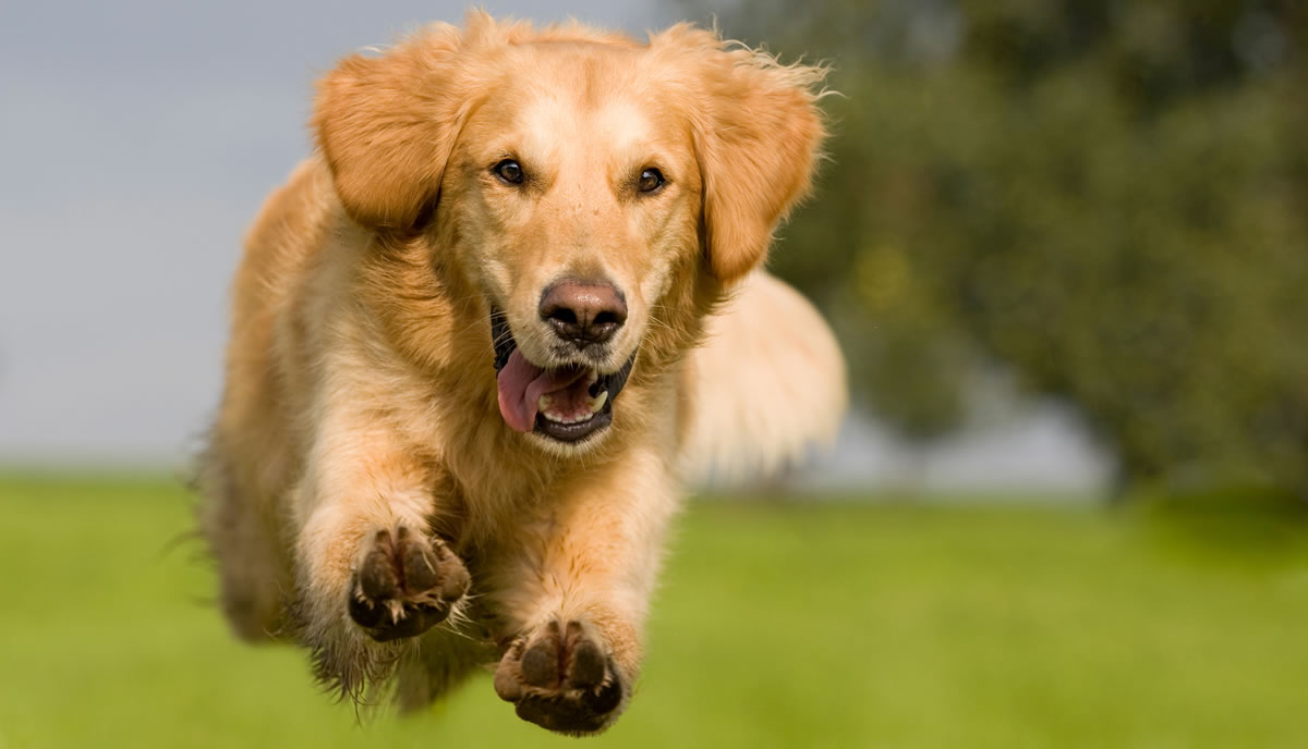 About The Pet Health Insurance - What Pet Owners Need To Know