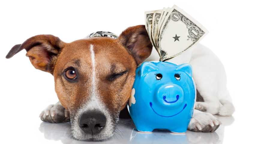 All That You Need To Know About Stem Cell Therapy for Dogs