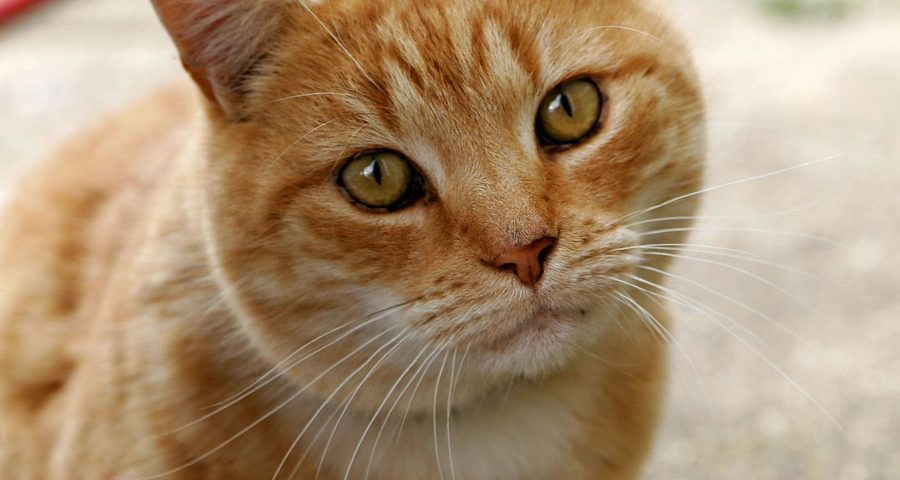 Cat Facts That Will Catch Your Interest
