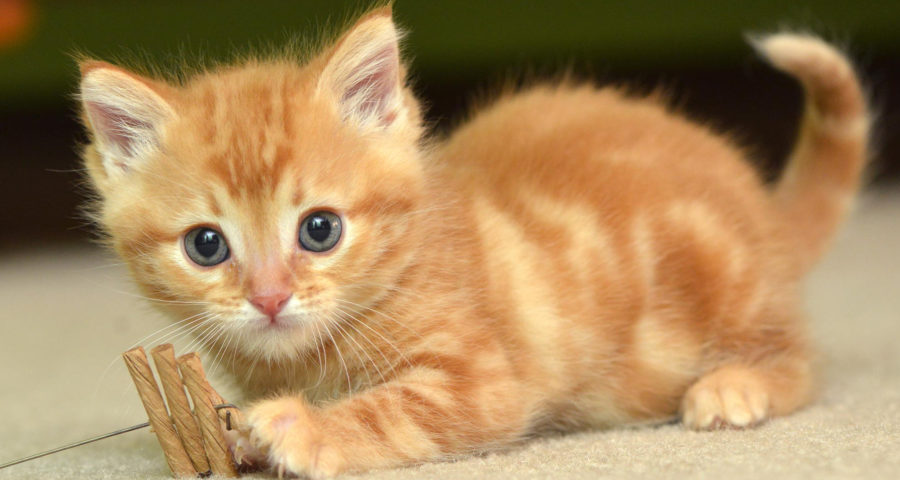 Cat Lover's Paradise