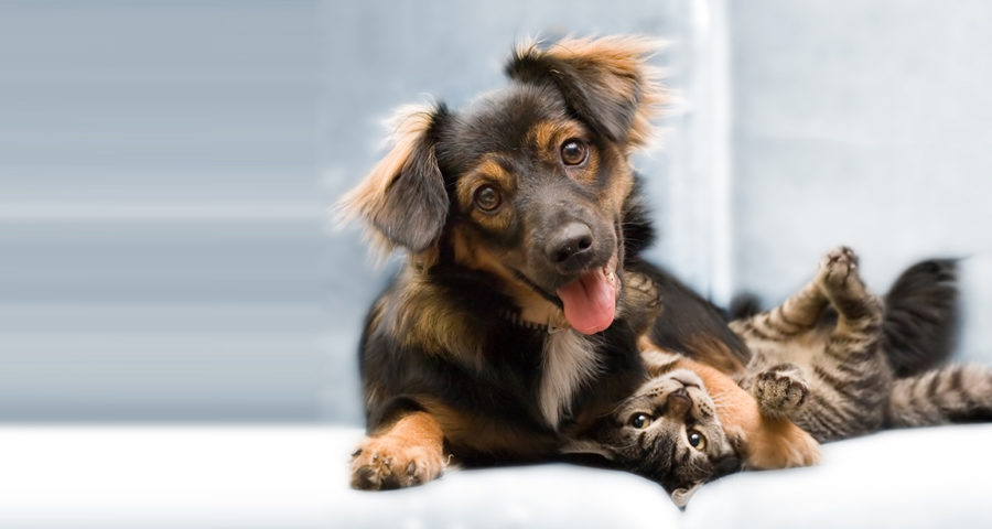 Dental Care For Dogs Tips And Tricks to Boost Your Pet's Oral Health