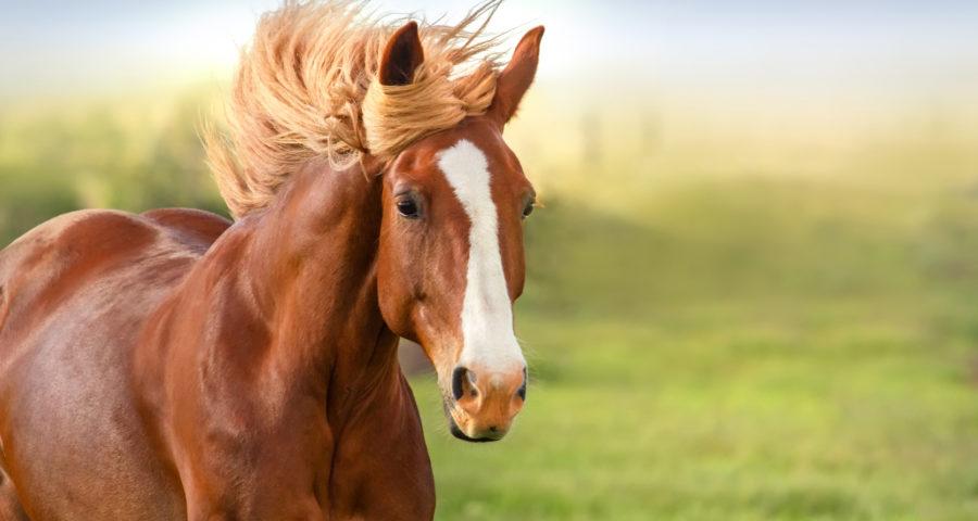 Finding Horse Trailer for Sale Online