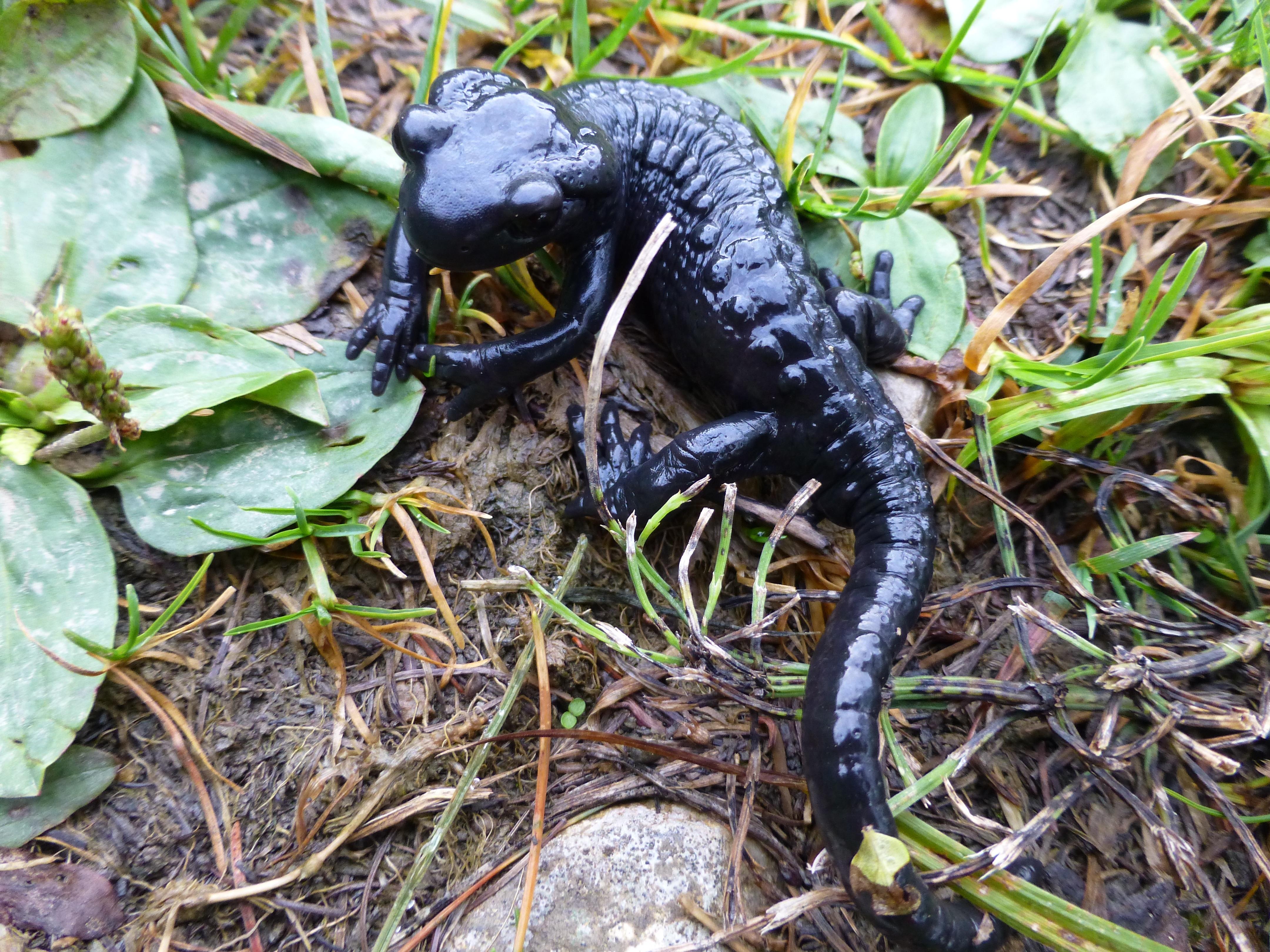 Green Iguana Vivarium Information And Instruction