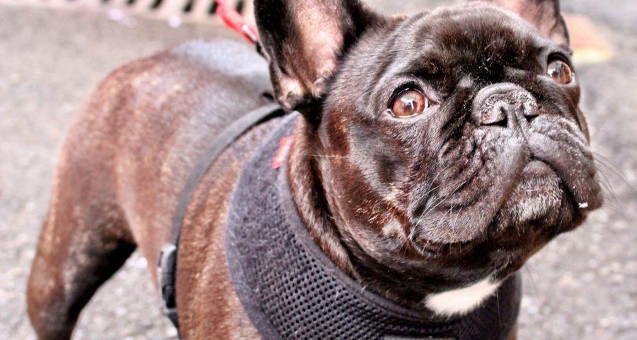 How Do You Know Your Dog Has Cancer Problem