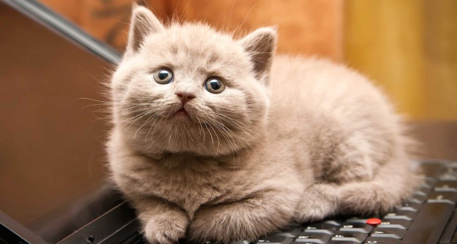 How to Prepare Yourself Before Buying a Cat For Yourself in Singapore