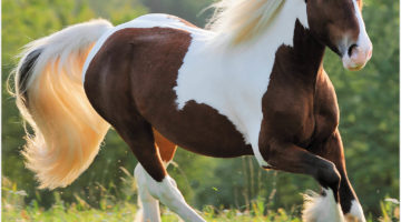 Importance of Buying Horse Supplies at an Online Store