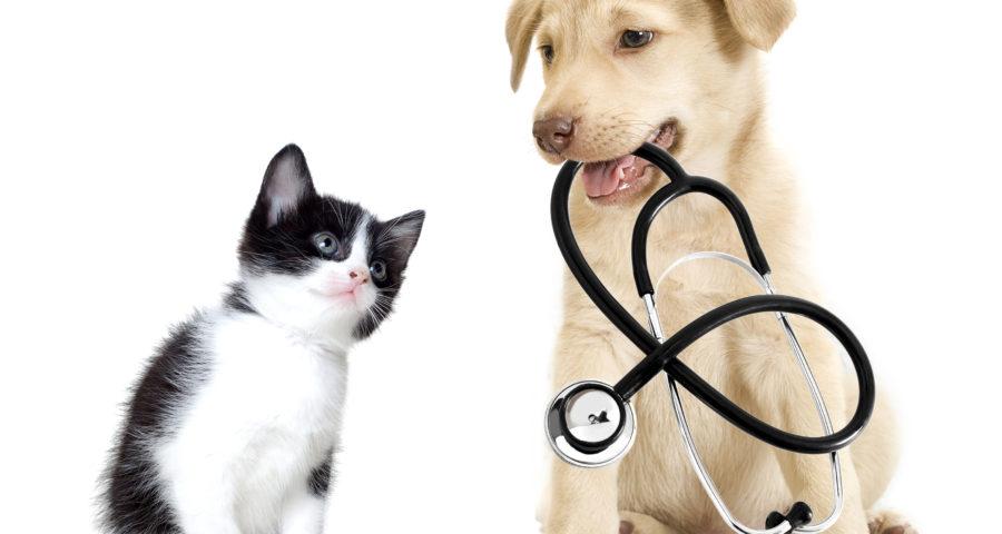 Simple Ways To Keep Your Animal Hospital Waiting Room Spotless