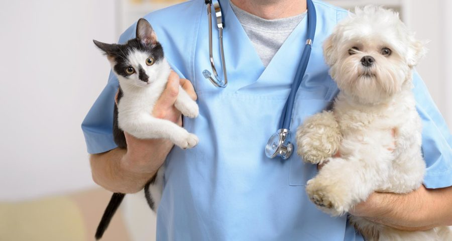 The Animal Doctor - Ensuring Safe And Infection Free Health For Your Pets