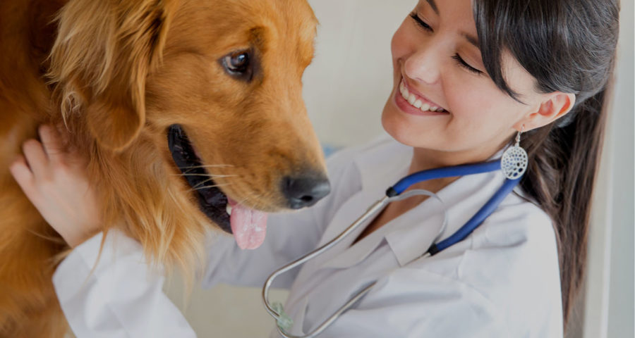 The Importance of Choosing Professional Pet Dental Services